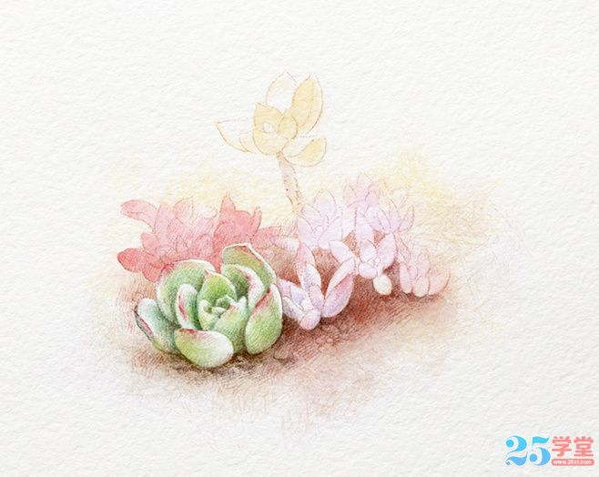 Fleshy watercolor painting 3