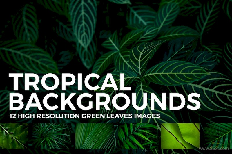 12 Tropical Leaves Backgrounds-4.jpg