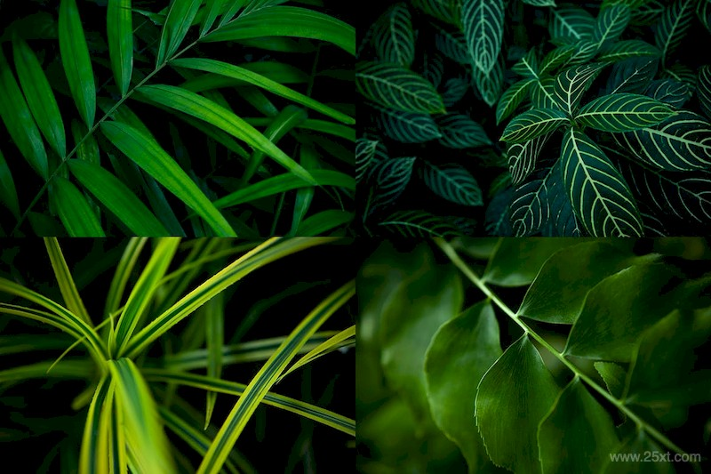 12 Tropical Leaves Backgrounds-1.jpg