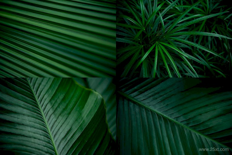 12 Tropical Leaves Backgrounds-2.jpg