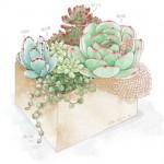 一组办公室白领最爱的多肉植物水彩绘画素材